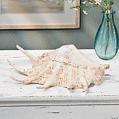 Brown Seashell Table Décor