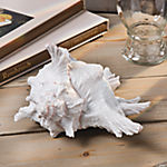 White Seashell Table Décor