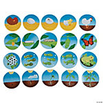 Life Cycle Magnet Assortment