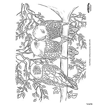 Bird Scene Adult Coloring Page