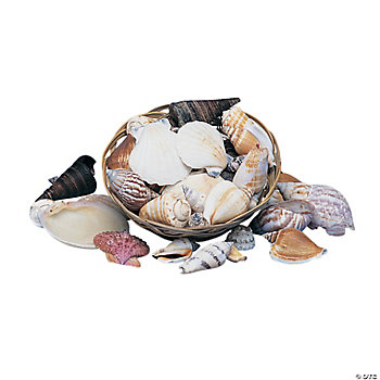 Shell Assortment In Basket