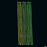 Glow-In-The-Dark Mardi Gras Necklaces