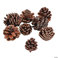Small Pinecones