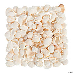 Natural Clamrose Seashells