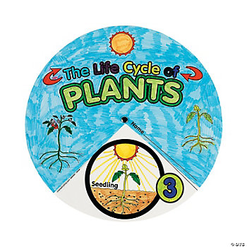 12 Color Your Own! Plant Life Cycle Wheel