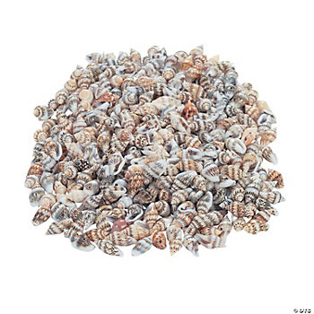 Natural Shell Bead Assortment - 3/4""