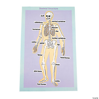 12 Skeletal Human Body Giant Sticker Scenes