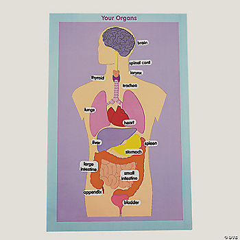 Digestive system trading cards