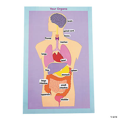 12 Organs of the Human Body Giant Sticker Scenes