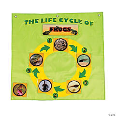 Life Cycle Pocket Chart