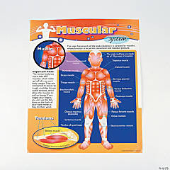6 Pc. Human Body Learning Chart Set
