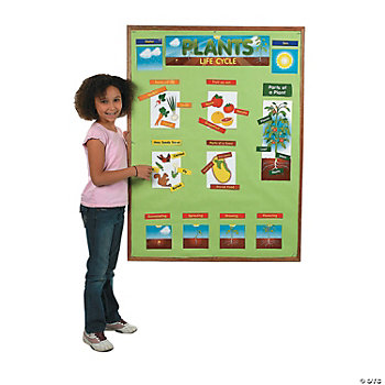 60 Pc. Plant Life Cycle Mini Bulletin Board Set