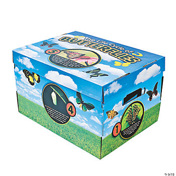 3 Bug Life Cycle Storage Boxes