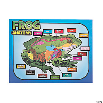 12 Frog Dissection Make-A-Sticker Scenes
