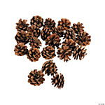 Bag of Pine Cones