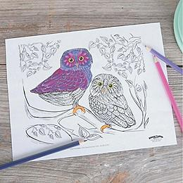 Owl Scene Coloring Page