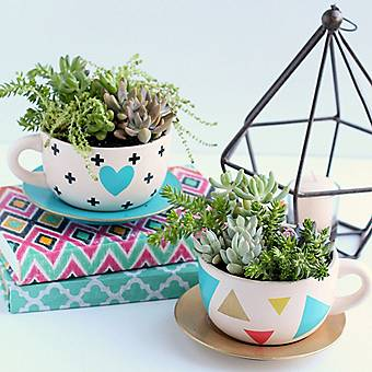 DIY Succulent Teacup Planter