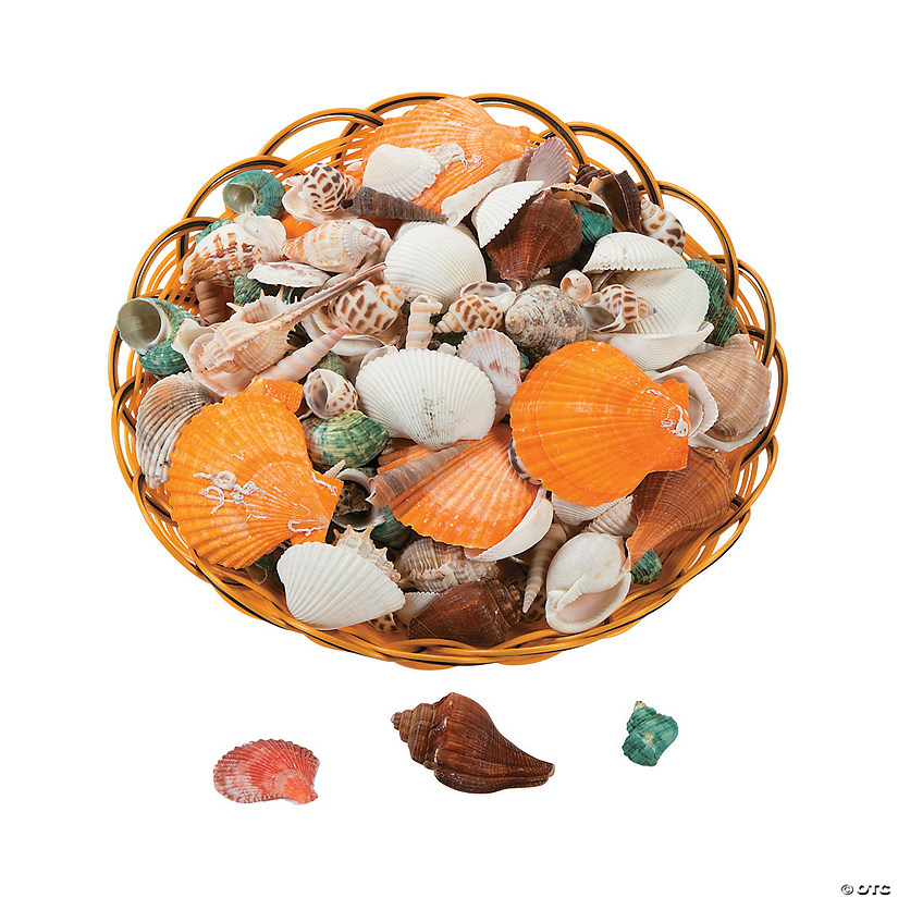 Basket of Assorted Sea Shells