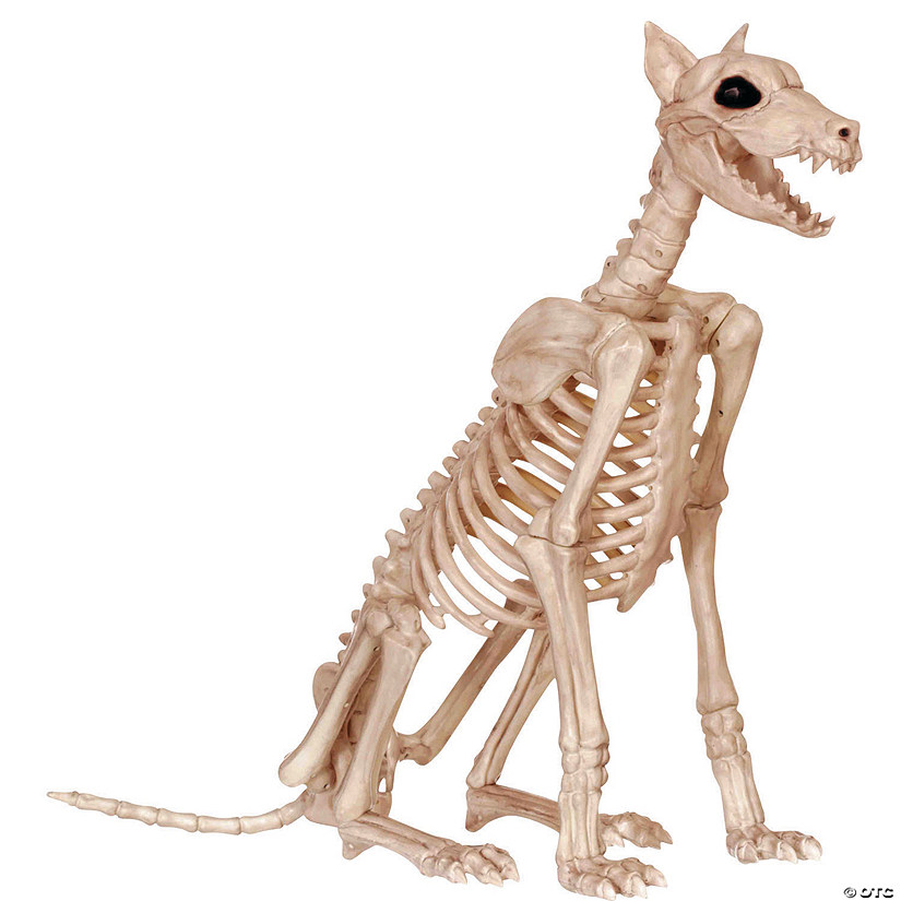 Doberman Skeleton