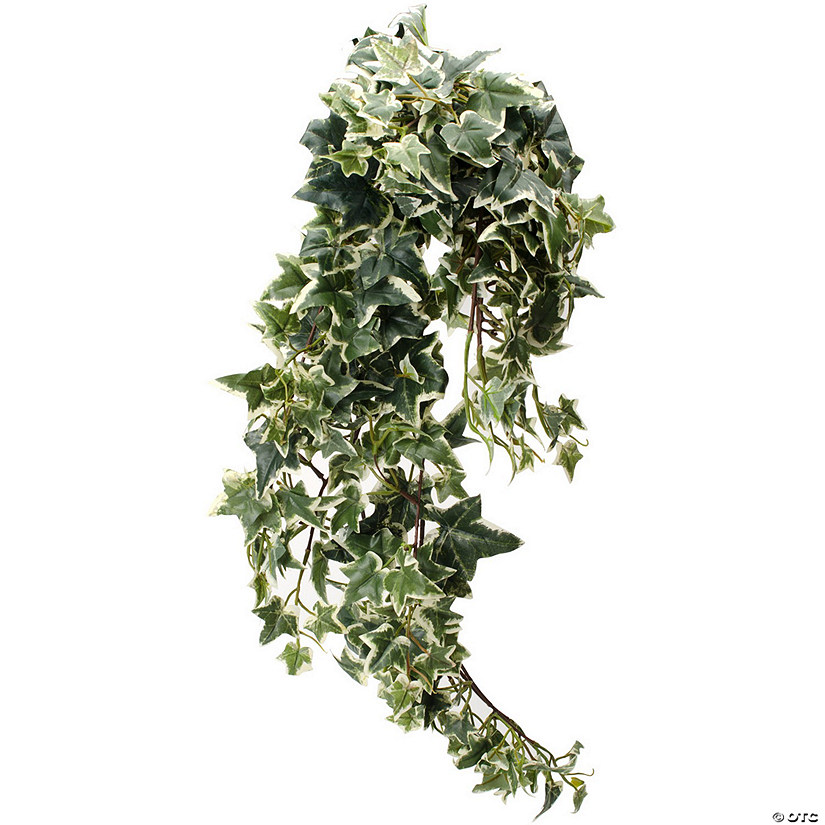 Hanging Courtyard English Ivy Bush X280-Cream/Green