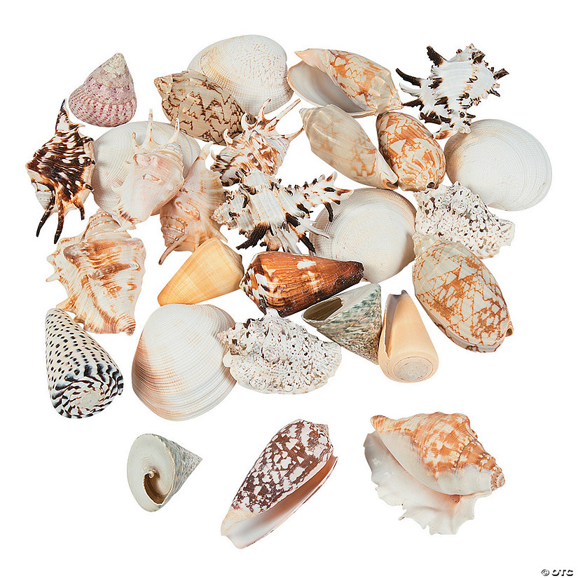 Mega Sea Shell Assortment