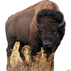 Bison Stand-Up