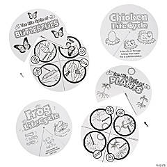 Color Your Own Life Cycle Wheel Assortment