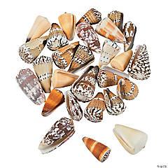 Conus Sea Shells