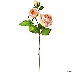 English Rose X2 + Bud 28