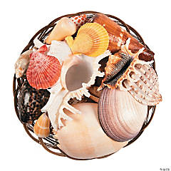 Fruit of the Sea Large Sea Shells