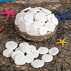 Genuine Sand Dollars with Basket