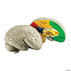 Learning Resources<sup>&#174;</sup> Cross-Section Human Brain Model