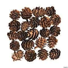 Mini Pinecones