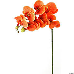 "Phaleanopsis Spray 28""-Orange"