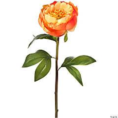 "Prize Peony Stem 22""-Apricot"
