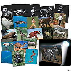 Roylco® What's Inside Animals Card Set