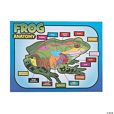 12 Frog Dissection Sticker Scenes