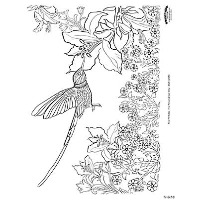 flowers monochrome hummingbirds coloring pages anti stress stock