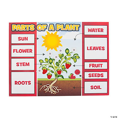 Plant Part Sticker Scenes
