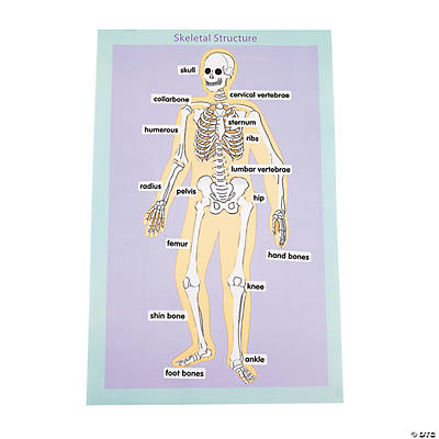 Skeletal Human Body Giant Sticker Scenes