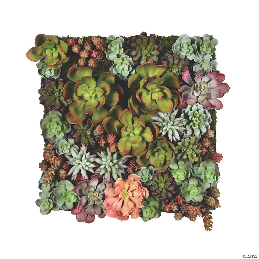 "16.5"" Multi-Colored Succulent Wall Arrangement Audio Thumbnail"