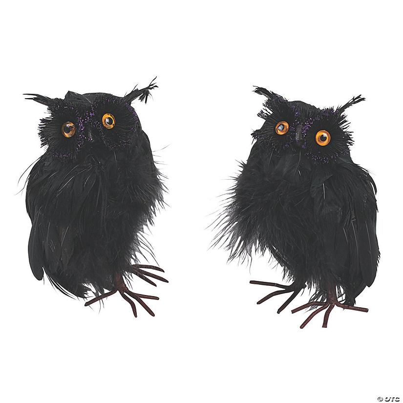 d85113554 Black Feathered Owls Audio Thumbnail