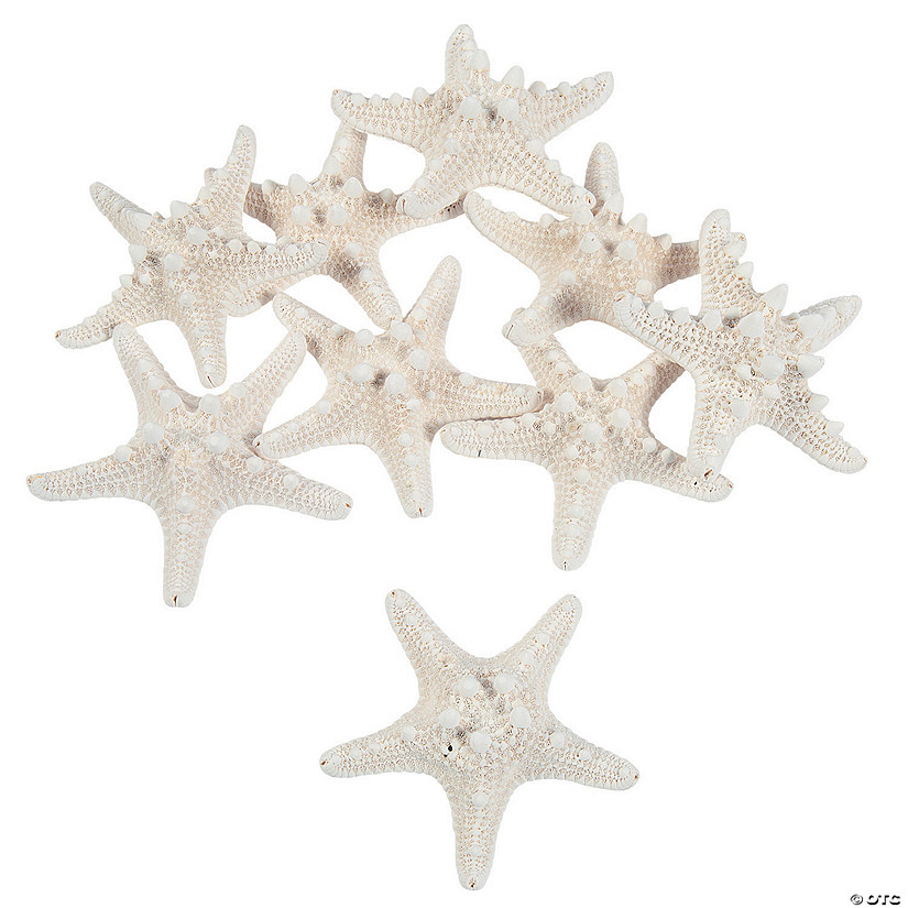 Natural Bleached Philippine Starfish