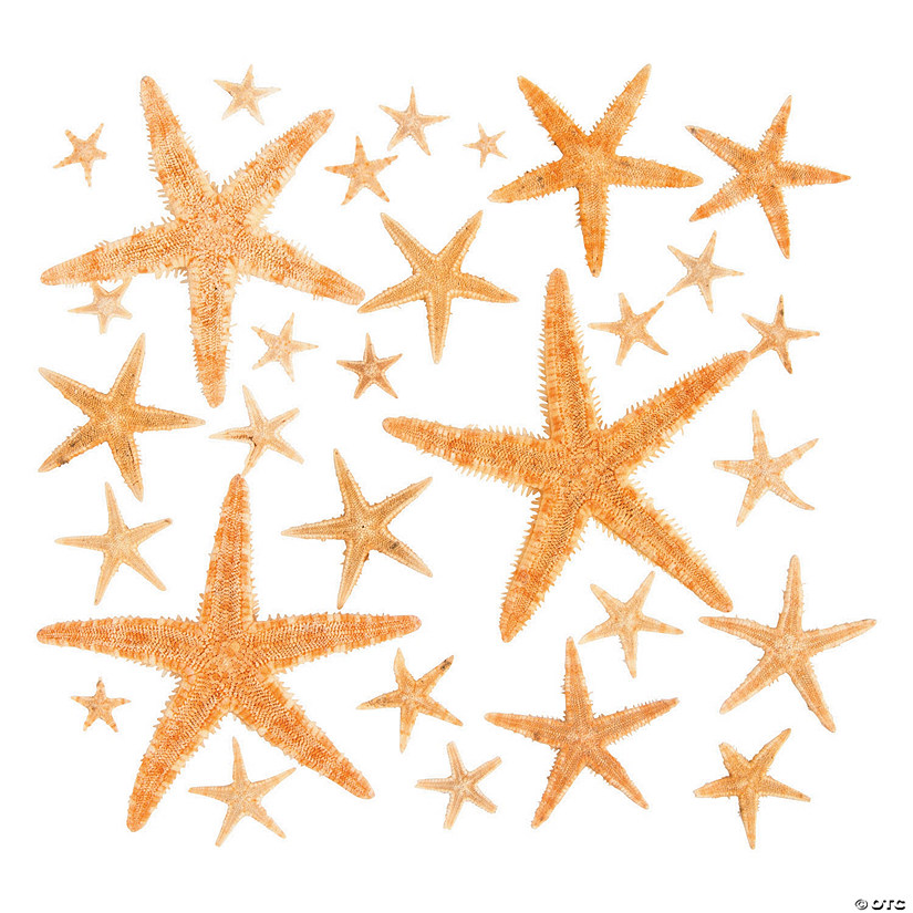 Natural Starfish Assortment Audio Thumbnail