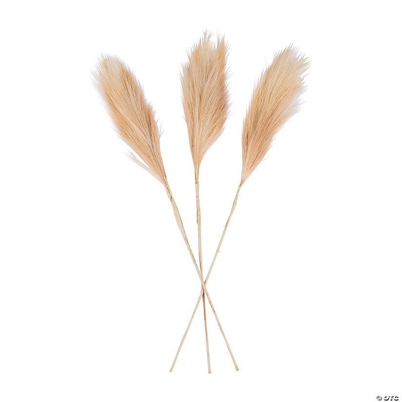 Pampas Grass Audio Thumbnail