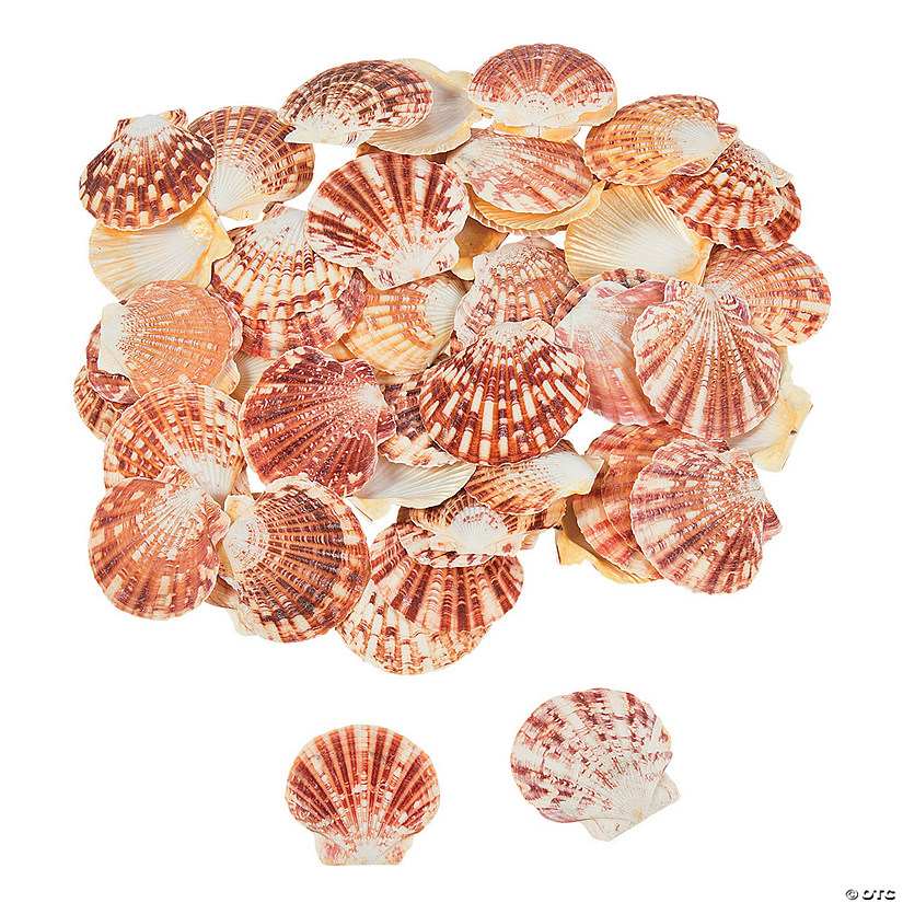 Pecten Macarensis Sea Shells Audio Thumbnail