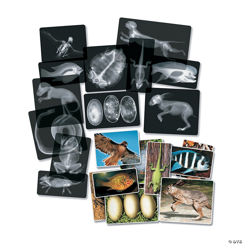 Roylco® Animal X-Ray Set, 14 per pack