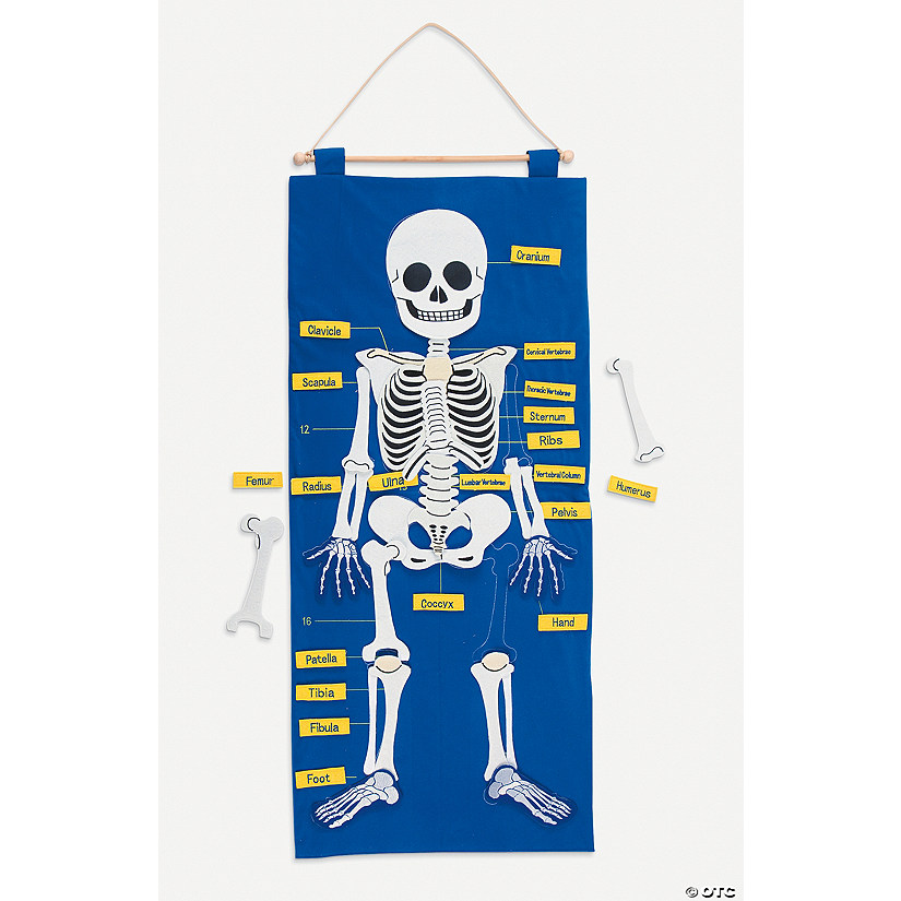 Skeleton Learning Chart Set