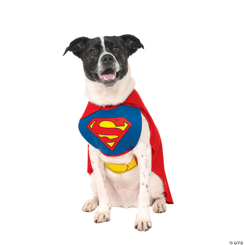 Superman Dog Costume Audio Thumbnail