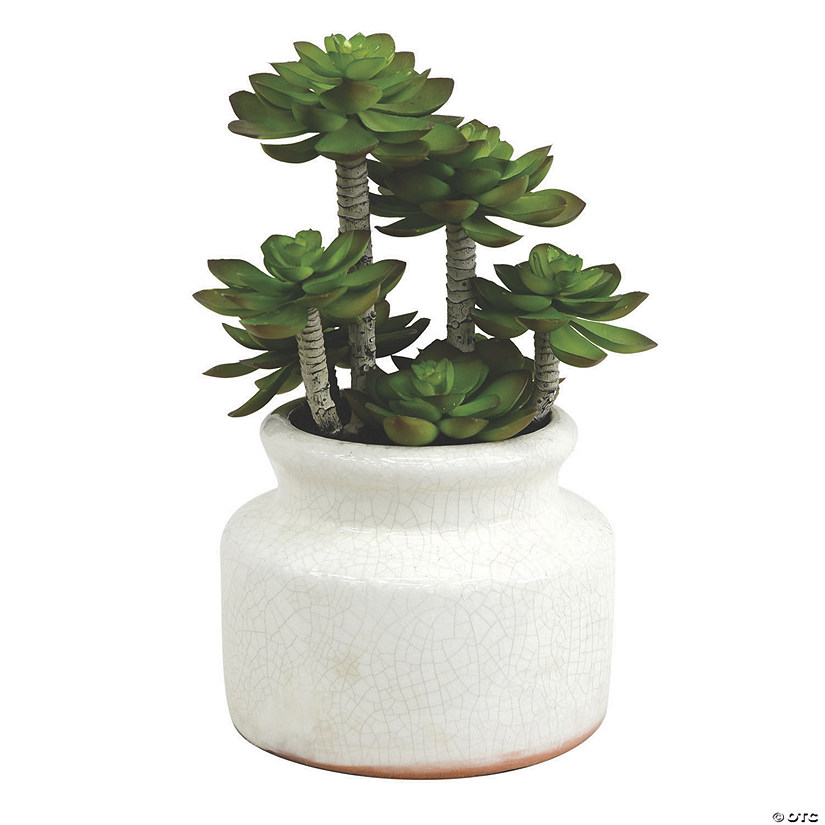 "Vickerman 11"" Artificial Green Succulent in Round Ceramic Pot Audio Thumbnail"